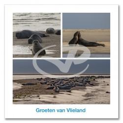 Ansichtkaart 15x15 Zeehonden Vlieland